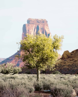 Eenzame boom in de woestijn van grand canyon met een hoge rots