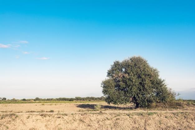 Eenzame boom in het boerenveld