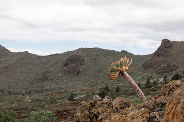 Eenzame boom in tropische woestijn