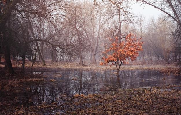 Eenzame boom met herfstbladeren in het midden van een moerasbos