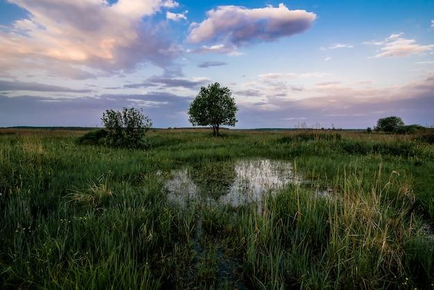 Eenzame boom op een gebied met een vijver met water bij dageraad in de lente of de zomer