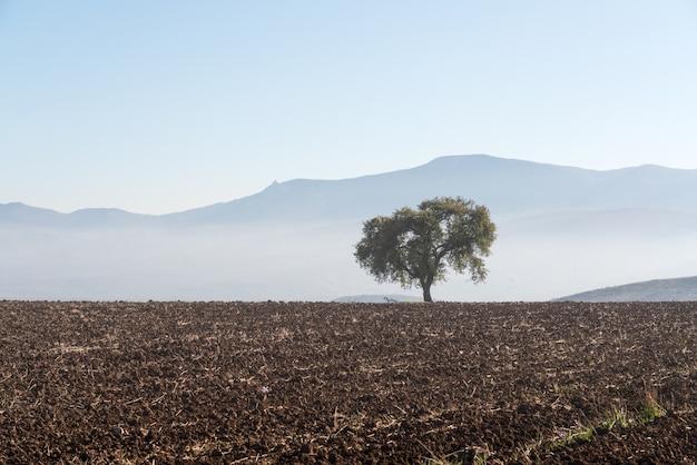 Eenzame boom op een geploegd boerderijveld