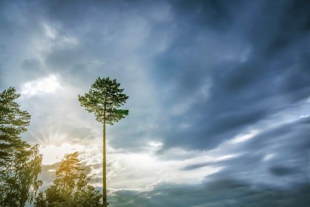 Eenzame boom tegen een donkerblauwe hemel. symbool van eenzaamheid. landschap natuur