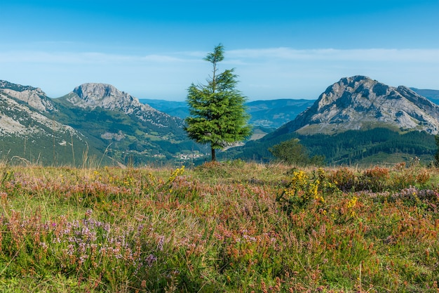 Eenzame boom tussen twee grote bergen