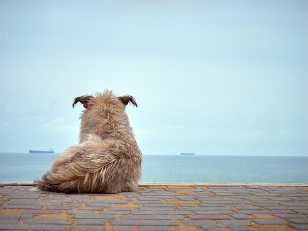 Eenzame dakloze ruige hond die naar de zee kijkt