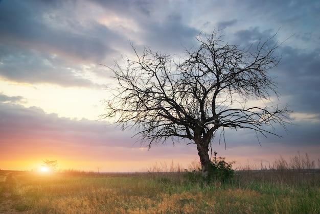 Eenzame dode boom.