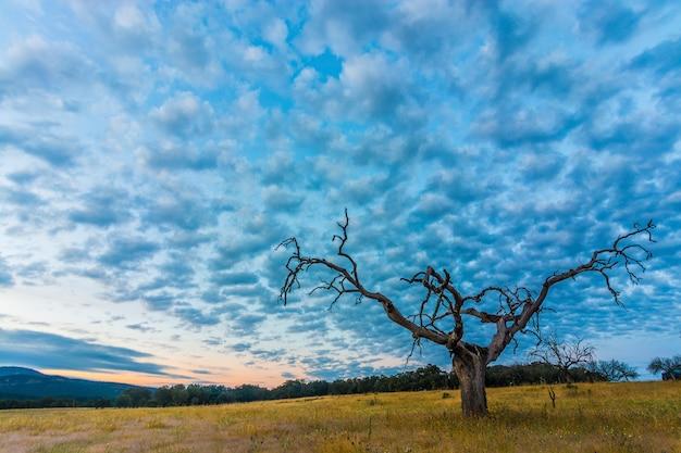Eenzame droge boom bij dageraad