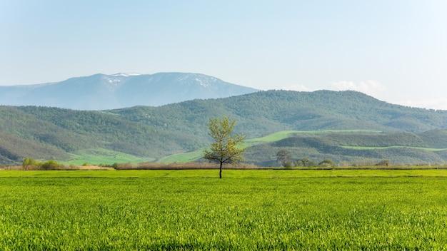 Eenzame groene boom op boerderij veld