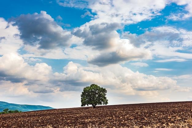 Eenzame groene boom op een geploegd boerderijveld
