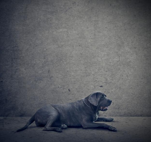 Eenzame grote hond