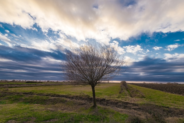 Eenzame kale boom in boerderij veld tegen bewolkte hemel