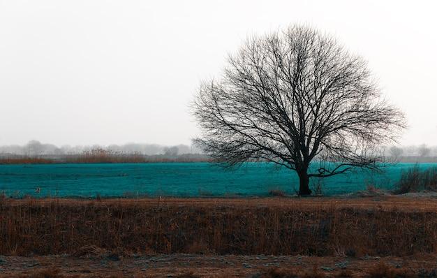 Eenzame kale boom in veld