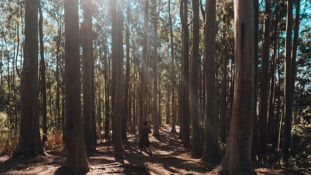 Eenzame persoon die ochtendoefeningen in een bos op een zonnige dag doet