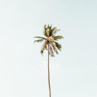 Eenzame tropische exotische kokospalm tegen grote blauwe hemel. neutraal met retro warme kleuren. zomer- en reisconcept op phuket