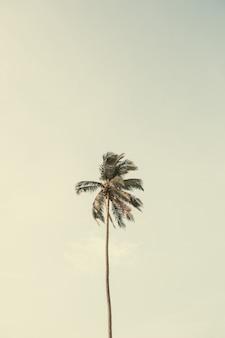 Eenzame tropische exotische kokospalm tegen grote blauwe hemel. neutraal met vintage retro gele kleuren. zomer- en reisconcept op phuket