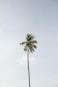 Eenzame tropische exotische kokospalm tegen grote blauwe hemel. neutrale. zomer- en reisconcept op phuket