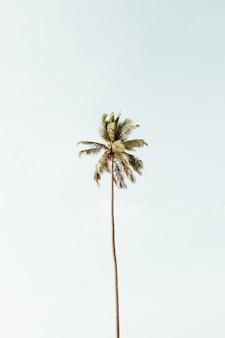 Eenzame tropische exotische kokospalm tegen grote blauwe hemel