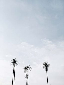 Eenzame tropische exotische kokospalmen tegen blauwe hemel. neutraal minimaal. zomer- en reisconcept op phuket