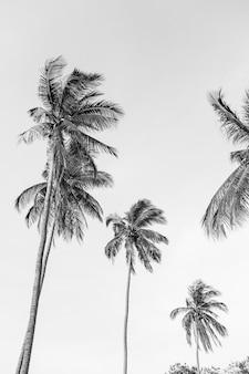 Eenzame tropische exotische kokospalmen tegen blauwe hemel. neutraal zwart en wit. zomer- en reisconcept op phuket
