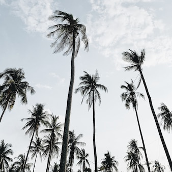 Eenzame tropische exotische kokospalmen tegen blauwe hemel op winderige dag