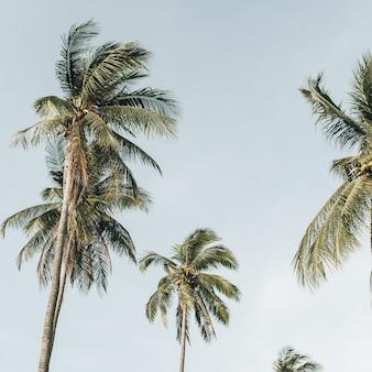 Eenzame tropische exotische kokospalmen tegen blauwe hemel