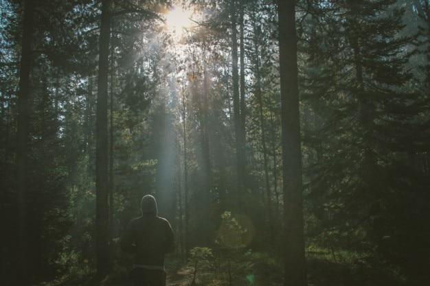 Eenzame wandelaar in het bos