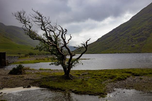 Eenzame winderige boom in doo lough, county mayo, ierland