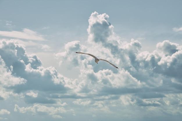 Eenzame zeemeeuw vliegt door wolken