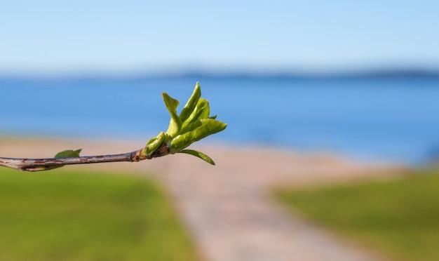 Eerste bladeren en nieren in de lente in fel zonlicht op wazig blauw meer