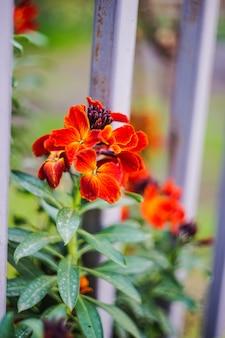 Eerste lente bloemen in een tuin