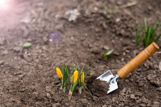 Eerste lente schiet.
