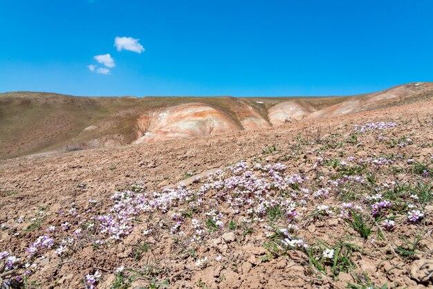 Eerste lentebloemen op bergtop