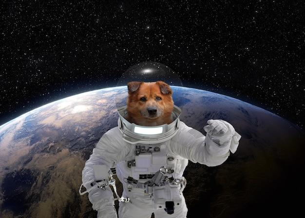 Eerste reis naar de ruimte hondenastronaut in een ruimtepak portret van een hondenastronaut in de ruimte