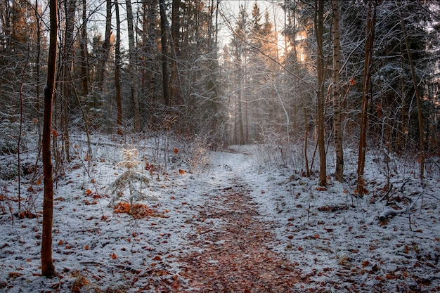 Eerste sneeuw en vorst in het herfstbos