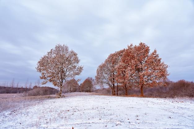 Eerste sneeuw in het herfstbos. herfstkleuren op de bomen.
