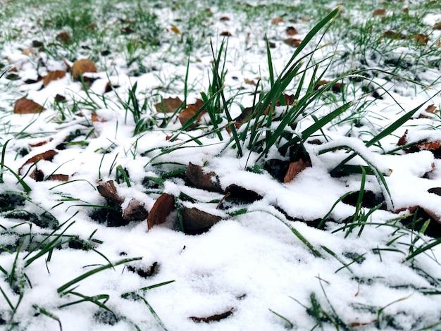 Eerste sneeuw op herfstbladeren en groen gras