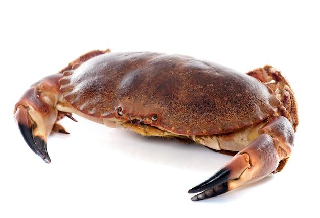 Eetbare bruine krab