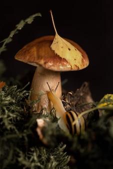 Eetbare paddenstoel met blad op de dop en schattige slak met hoorns in de buurt
