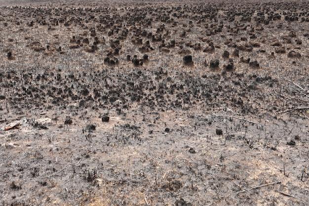Effecten van grasbrand op de bodem. verkoold gras na een lentevuur. zwarte oppervlak van het landelijke veld met een verbrand gras. gevolgen van brandstichting en stoppels. nasleep van natuurrampen.