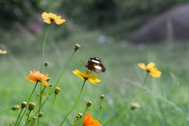 Eggfly butterfllies zittend op de bloemen omgeven door groen