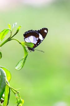 Eggfly vlinder rustend onder het blad van een plant met een mooie zachtgroene wazige achtergrond
