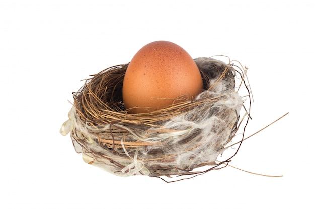 Ei binnen vogelnest dat op witte muur wordt geïsoleerd