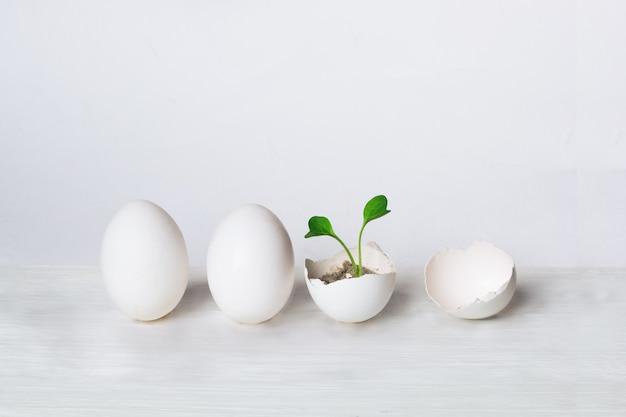 Eieren en groene spruit. het concept van de geboorte van een nieuw leven. ecologisch concept.