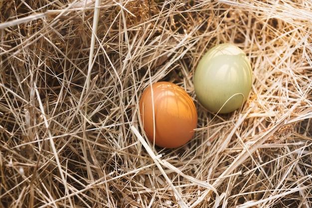 Eieren in de natuur