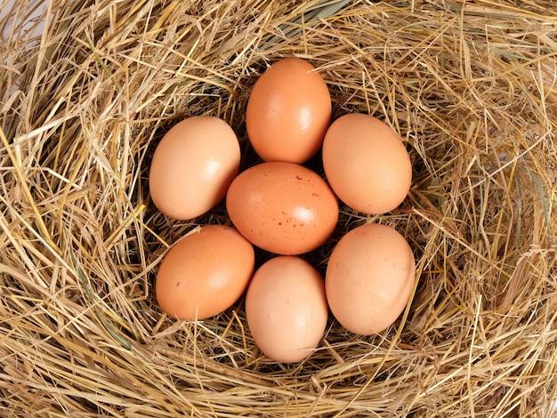 Eieren in een kippennest bovenaanzicht.