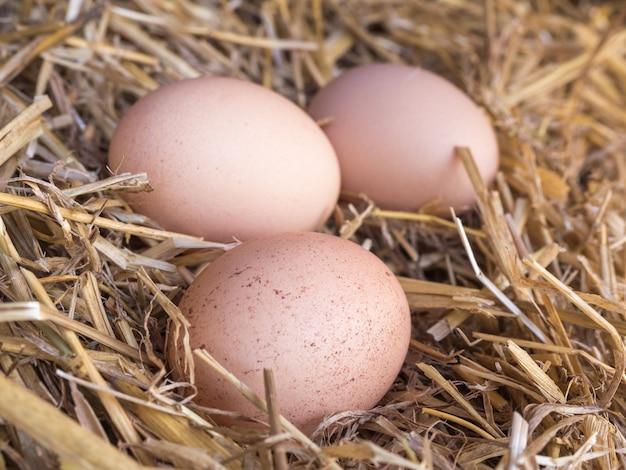 Eieren in een nest