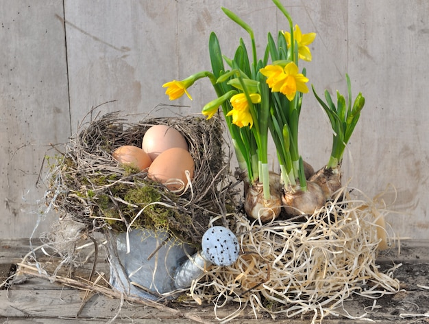 Eieren in nest met narcissen