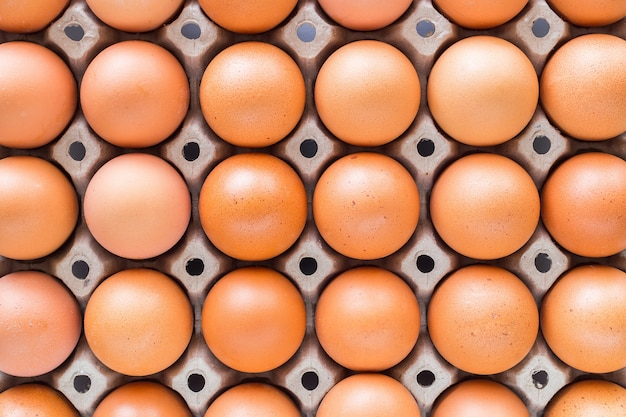 Eieren in trays gevoerd Premium Foto