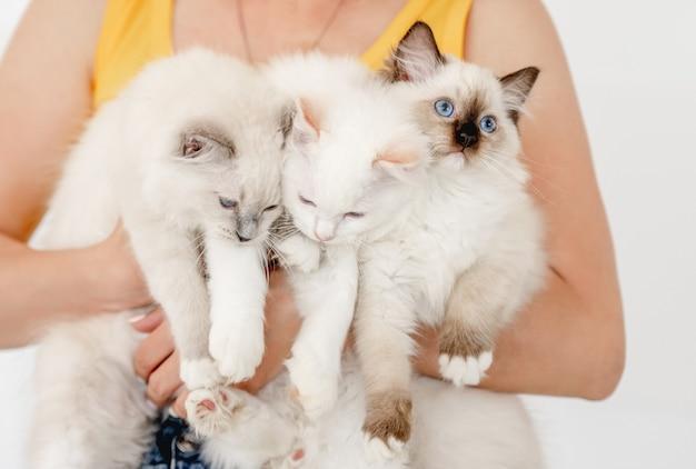 Eigenaar die drie pluizige ragdoll-katten in haar handen houdt. meisje met binnenlandse harige rasechte katachtige huisdieren met mooie blauwe ogen