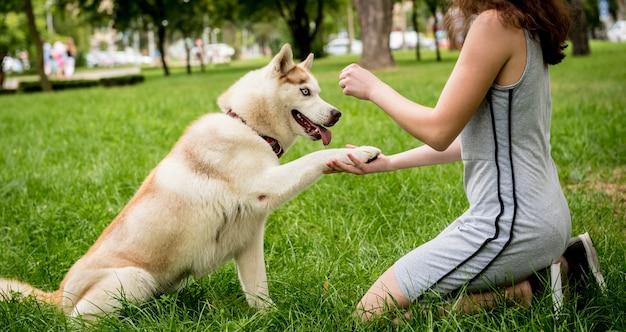 Eigenaar traint de huskyhond in het park